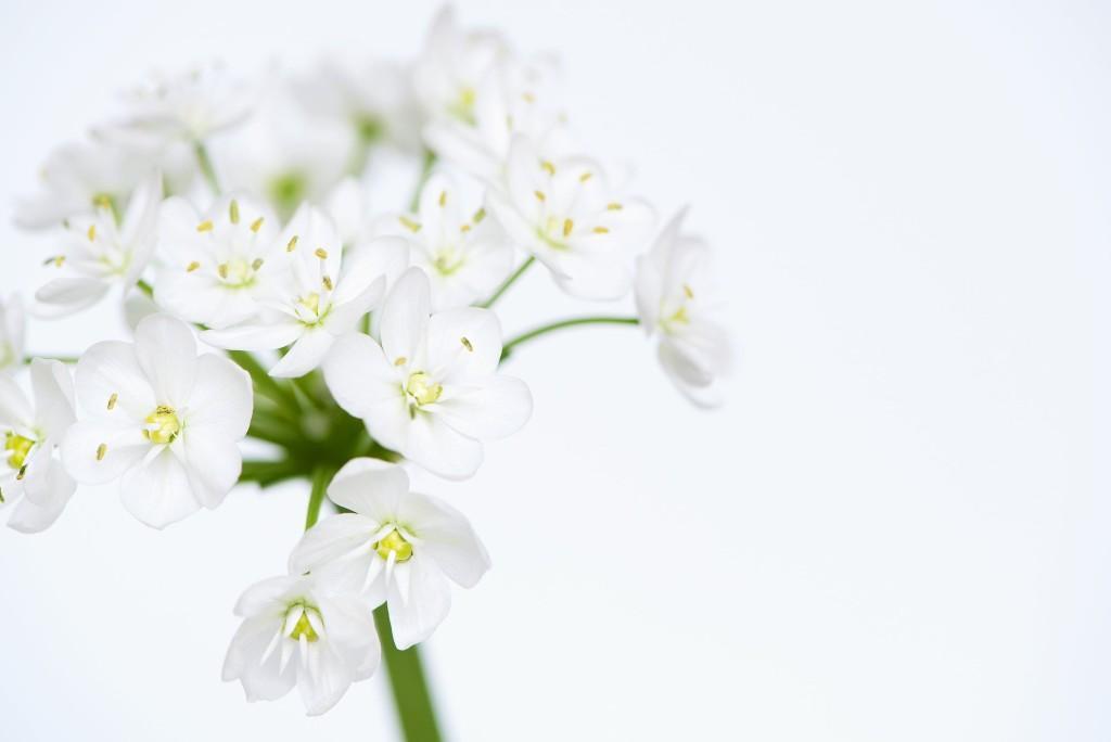 Valge lill